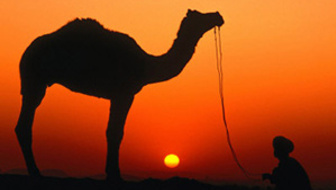List_stribley-dallas-camel-and-herder-silhouetted-at-sunset-at-camel-fair-pushkar-rajasthan-india
